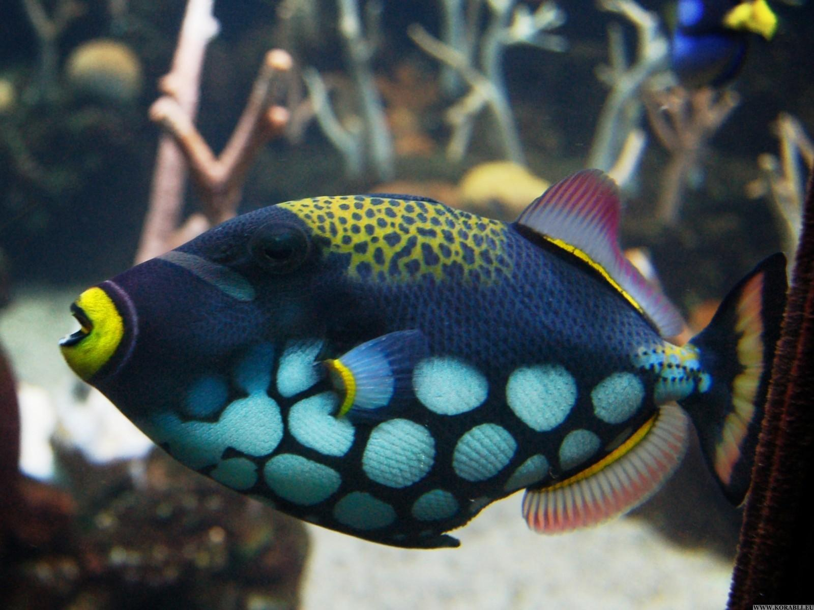 Colourful tropical fish species